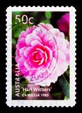 Hari Withers Camelia, Cultivars serie, circa 2003 Royalty Free Stock Photo