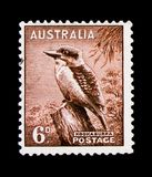 Kookaburra Dacelo novaeguineae, Zoological serie, circa 1956. MOSCOW, RUSSIA - OCTOBER 3, 2017: A stamp printed in Australia shows Kookaburra Dacelo novaeguineae Stock Images
