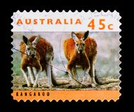 Red Kangaroo Macropus rufus, Kangaroos and Koalas serie, circa 1994 Stock Photos