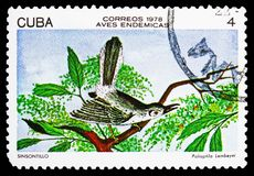 Cuban Gnatcatcher (Polioptila lembeyei), Endemic birds serie, circa 1978. MOSCOW, RUSSIA - OCTOBER 21, 2018: A stamp printed in Cuba shows Cuban Gnatcatcher ( royalty free illustration
