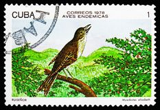 Cuban Solitaire (Myadestes elisabeth), Endemic birds serie, circa 1978. MOSCOW, RUSSIA - OCTOBER 21, 2018: A stamp printed in Cuba shows Cuban Solitaire ( vector illustration
