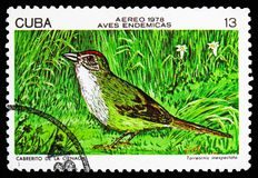 Cuban Sparrow (Torreornis inexpectata), Endemic birds serie, circa 1978. MOSCOW, RUSSIA - OCTOBER 21, 2018: A stamp printed in Cuba shows Cuban Sparrow ( royalty free illustration