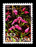 Cephalanthera rubra - Red Helleborine, Flowers Endangered serie, circa 1990. MOSCOW, RUSSIA - OCTOBER 3, 2017: A stamp printed in Denmark shows Cephalanthera Royalty Free Stock Image