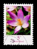 Flowers - Krokus Elves Crocus, serie, circa 2005. MOSCOW, RUSSIA - OCTOBER 21, 2017: A stamp printed in German Federal republic shows Flowers - Krokus Elves Royalty Free Stock Photos