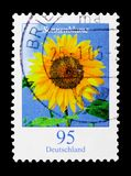 Flowers - Sonnenblume Sunflower, serie, circa 2005. MOSCOW, RUSSIA - OCTOBER 21, 2017: A stamp printed in German Federal republic shows Flowers - Sonnenblume royalty free stock photography