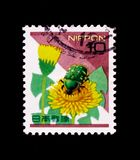 Smaller Green Flower Chafer Oxycetonia jucunda, Dandelion, Nature in Japan serie, circa 1997 Royalty Free Stock Photography