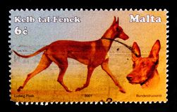 Egyptian Pharaoh Hound Canis lupus familiaris, Maltese Dogs serie, circa 2001. MOSCOW, RUSSIA - OCTOBER 3, 2017: A stamp printed in Malta shows Egyptian Pharaoh Stock Photo
