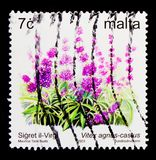Virgin Bush Vitex agnus-castus and flowers, serie, circa 2003. MOSCOW, RUSSIA - OCTOBER 3, 2017: A stamp printed in Malta shows the Virgin Bush Vitex agnus Stock Images