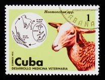 MOSCOW, RUSSIA - SEPTEMBER 3, 2017: A stamp printed in Cuba show royalty free stock photography