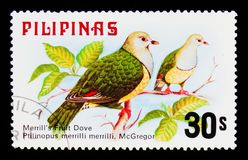 Merrill`s Fruit Dove Ptilinopus merrilli, Fauna - Birds serie, circa 1979. MOSCOW, RUSSIA - SEPTEMBER 3, 2017: A stamp printed in Philippines shows Merrill`s Stock Image
