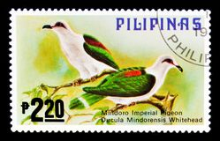 Mindoro Imperial-pigeon Ducula mindorensis, Fauna - Birds serie, circa 1979. MOSCOW, RUSSIA - SEPTEMBER 3, 2017: A stamp printed in Philippines shows Mindoro Stock Photography