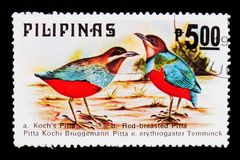 Whiskered Pitta Pitta kochi, Red-bellied Pitta, Fauna - Birds serie, circa 1979. MOSCOW, RUSSIA - SEPTEMBER 3, 2017: A stamp printed in Philippines shows Stock Image