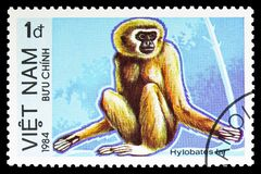Lar Gibbon Hylobates lar, Endangered Animals serie, circa 1984. MOSCOW, RUSSIA - SEPTEMBER 26, 2018: A stamp printed in Vietnam shows Lar Gibbon Hylobates lar stock images