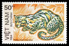 Marbled Cat Felis marmorata, Endangered Animals serie, circa 1984. MOSCOW, RUSSIA - SEPTEMBER 26, 2018: A stamp printed in Vietnam shows Marbled Cat Felis stock photography