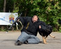 Training service dog for the detention of an armed criminal royalty free stock photography