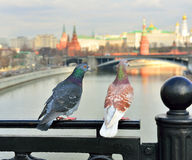 Moscow, spring, doves, love Royalty Free Stock Photo