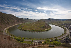 Mosel bend near bremm. Bend of the River Mosel and vineyards at the Calmont hills near village of Bremm Royalty Free Stock Photo
