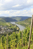 Mosel river with vineyard Royalty Free Stock Image