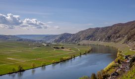 Mosel River and Vineyards Landscape at Piesport Rheinland Pfalz. Mosel River and Vineyards Landscape in bright spring green at Piesport Rheinland Pfalz Germany Royalty Free Stock Photography