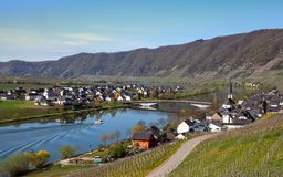 Mosel River and Vineyards Landscape at Piesport Rheinland Pfalz. Mosel River and Vineyards Landscape in bright spring green at Piesport Rheinland Pfalz Germany Stock Photos