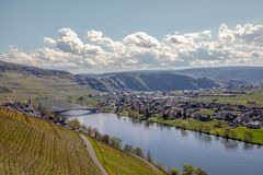 Mosel River and Vineyards Landscape at Piesport Rheinland Pfalz. Mosel River and Vineyards Landscape in bright spring green at Piesport Rheinland Pfalz Germany Royalty Free Stock Images