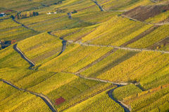 Mosel Vineyard Stock Images