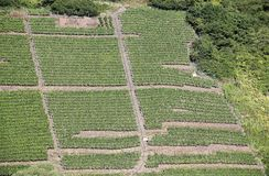 Mosel vineyards along the river Moselle (Mosel), Rhineland-Palatinate, Germany. Stock Image