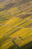 mosel vingård royaltyfri fotografi