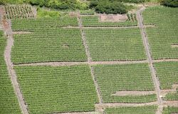 Mosel vingårdar längs floden Moselle (Mosel), Rheinland-Pfalz, Tyskland Fotografering för Bildbyråer