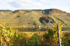 Moselle dal med tarmkanalen Geiersley Royaltyfri Bild