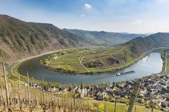 Moselle flodögla i Bremm, Tyskland Fotografering för Bildbyråer