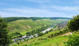 Moselle river with vineyards on hills, Germany Stock Photo