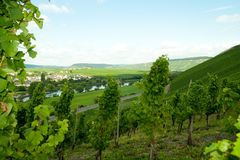 Moselle valley Stock Image