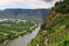 Moselle valley. Valley along the river Moselle in Germany with wine ranks on the slopes Royalty Free Stock Photos