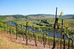 Moselle valley near Pünderich. And Reil in springtime Stock Images