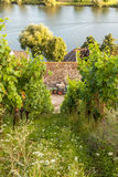 Moselle  vineyard vine Agriculture Landscape Germany Stock Photography
