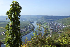 The moselle yalley Stock Image