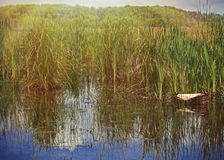 Moses basket in the rushes. A wicker or reed basket floating among the reeds and cattails in bright sunshine as baby Moses might have during the Bible story Royalty Free Stock Photo