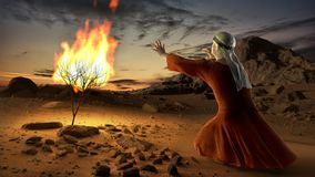 Moses and the burning bush stock video footage