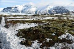 Mosgebied en gletsjer Royalty-vrije Stock Fotografie