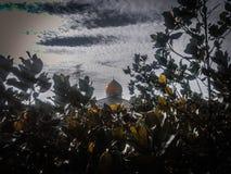 Moské och natur Royaltyfri Fotografi
