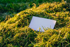Mosk-up. the original. Background for business cards and websites . background of cut grass, hay. at sunset Royalty Free Stock Images