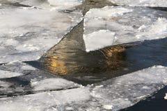 Moskau-Fluss im Winter die Hauben der Kathedrale von Christus reflektierend der Retter stockfoto
