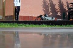 Moskau Kremlin Alexanders& x27; Garten Schutz der Ehre stockfotos