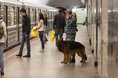 MOSKAU, RUSSLAND - 30. APRIL 2018: Ein cynologist mit einem Hund in der U-Bahn Stockbilder