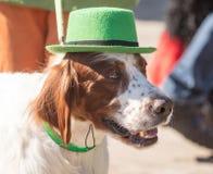 MOSKAU, RUSSLAND - 24. MÄRZ 2018: Der Hund feiert den TAG des HEILIGEN PATRICK Stockfoto