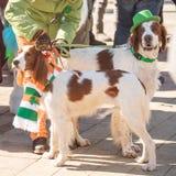 MOSKAU, RUSSLAND - 24. MÄRZ 2018: Der Hund feiert den TAG des HEILIGEN PATRICK Stockfotos