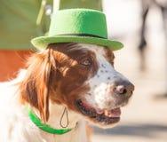 MOSKAU, RUSSLAND - 24. MÄRZ 2018: Der Hund feiert den TAG des HEILIGEN PATRICK Lizenzfreies Stockbild