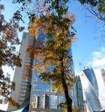 Moskau-Stadt und der Baum Stockfotografie