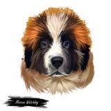 Moskau-Wachhund, Russe Moskovskaya-storozhevaya sobaka digitale Kunstillustration Russland entstand Haustier des großen Gewichts vektor abbildung